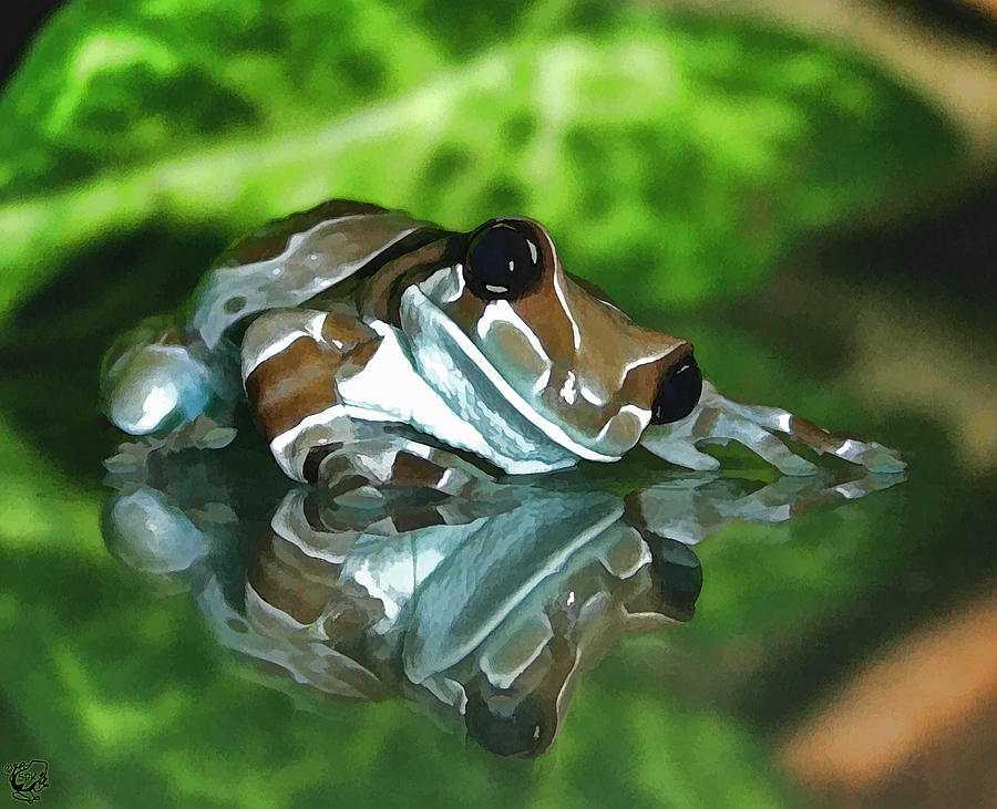 Amazon Milk Frog Photograph By Stephen Kinsey