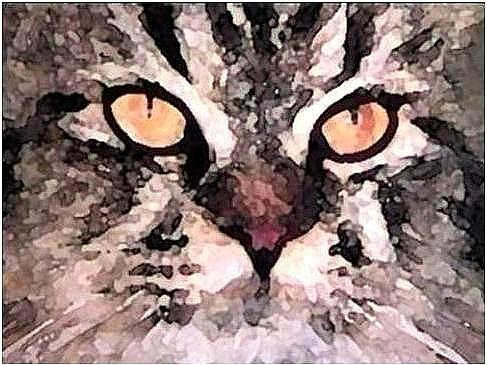 Cats Mixed Media - Amber by Brenda Garacci
