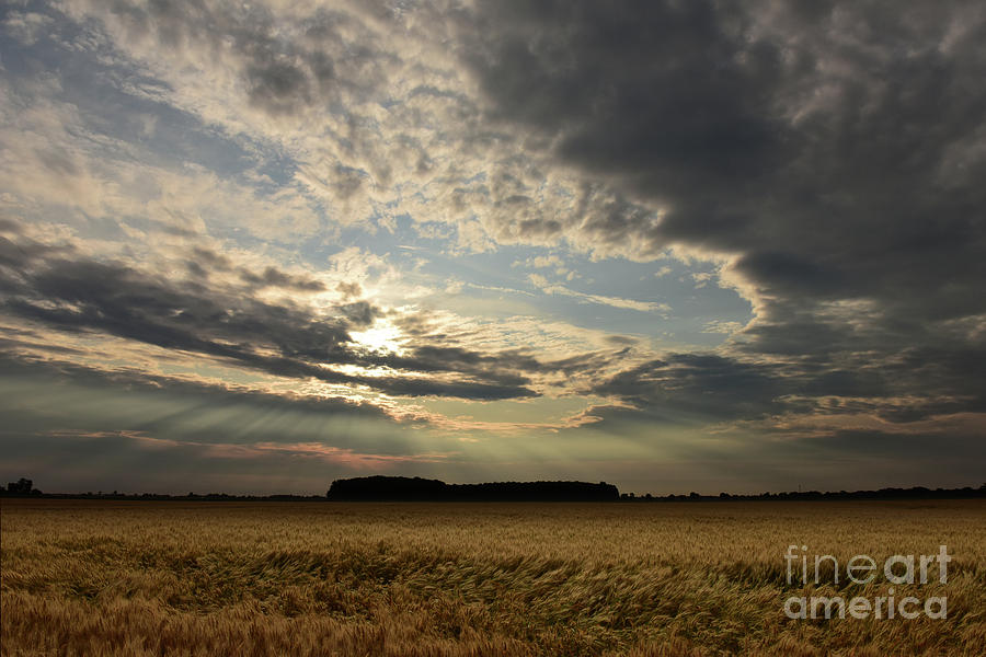 Amber Waves of Grain by Charles Owens