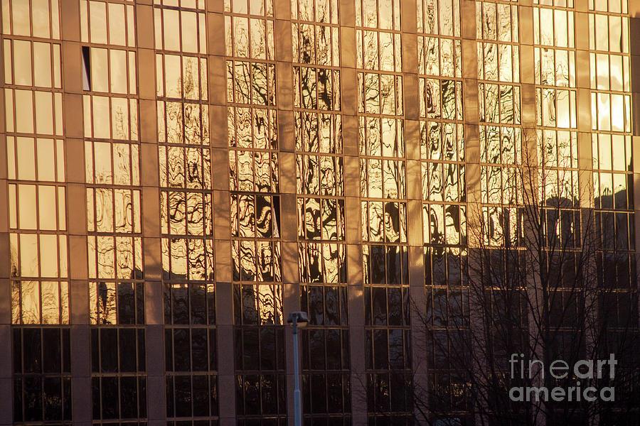 Amber Window by Ana Mireles