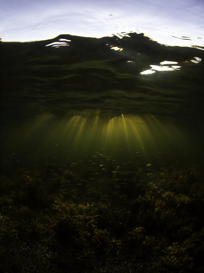 Ocean Photograph - Ambient Perch by Jay Holbrook