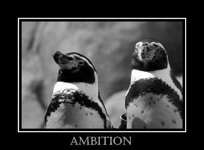 Ambition Photograph - Ambition by Kelly  Kane
