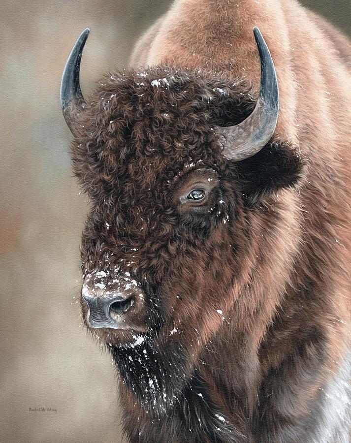American Bison Portrait Painting by Rachel Stribbling