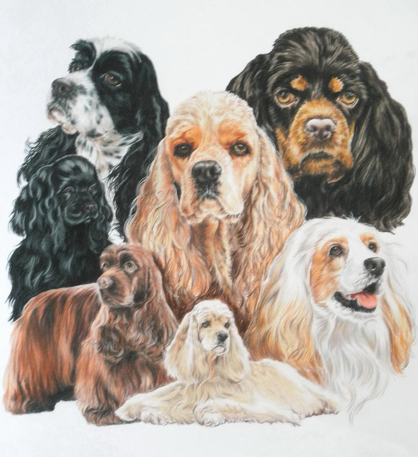 American Cocker Spaniel Drawing By Barbara Keith