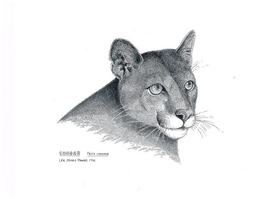Cat Drawing - Cougar by Lee Pantas