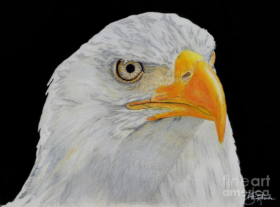 Eagle Drawing - American Eagle by Bill Richards