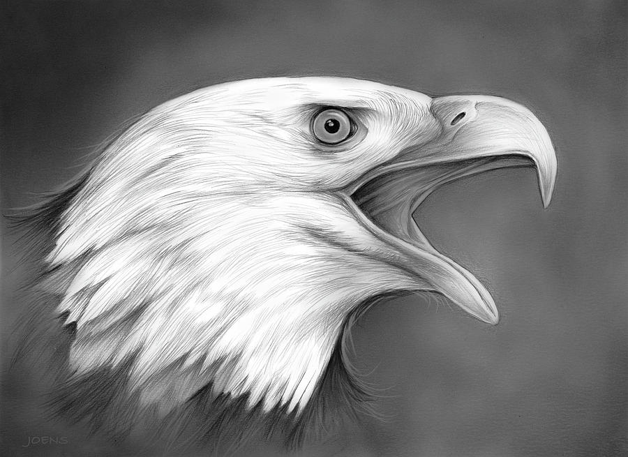 Рисованный орел картинки