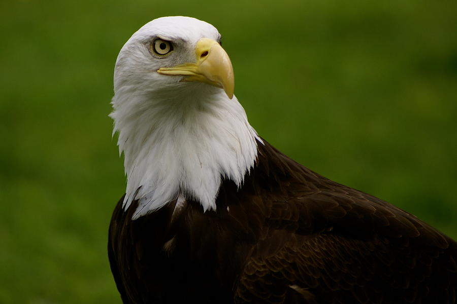 Zoo Photograph - American Heritage by Sonja Anderson