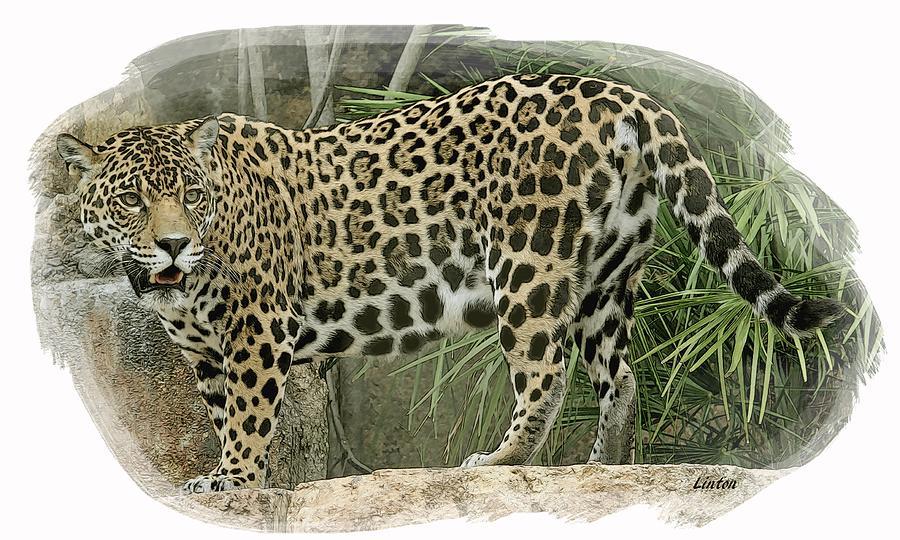 American Jaguar Digital Art - American Jaguar 18 by Larry Linton