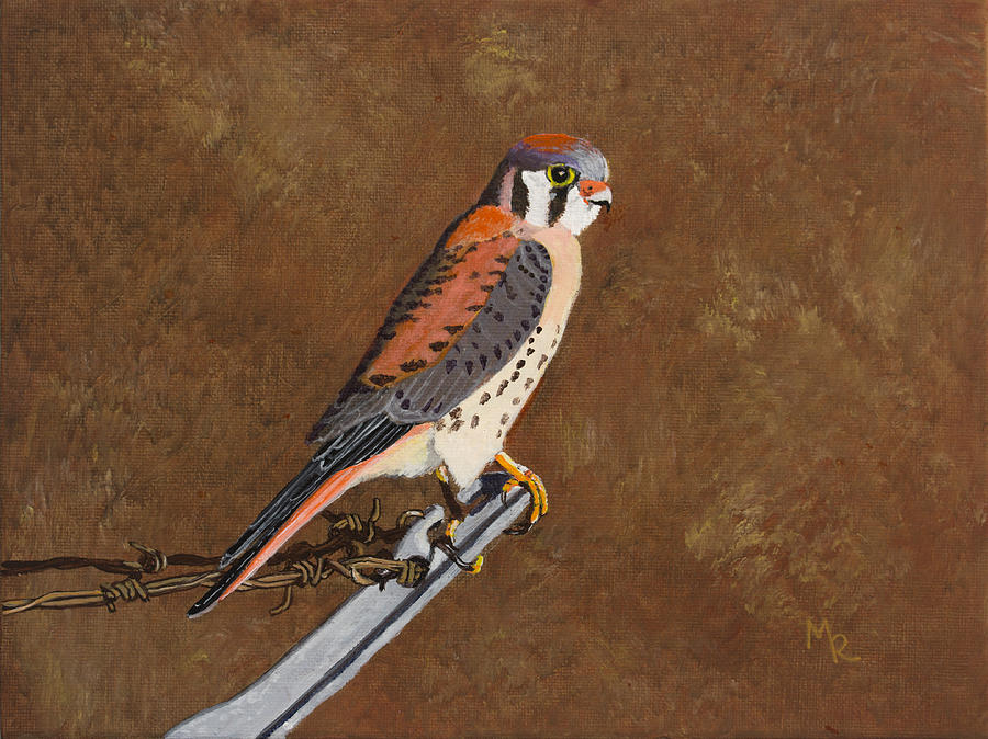 American Kestrel by Mike Robles