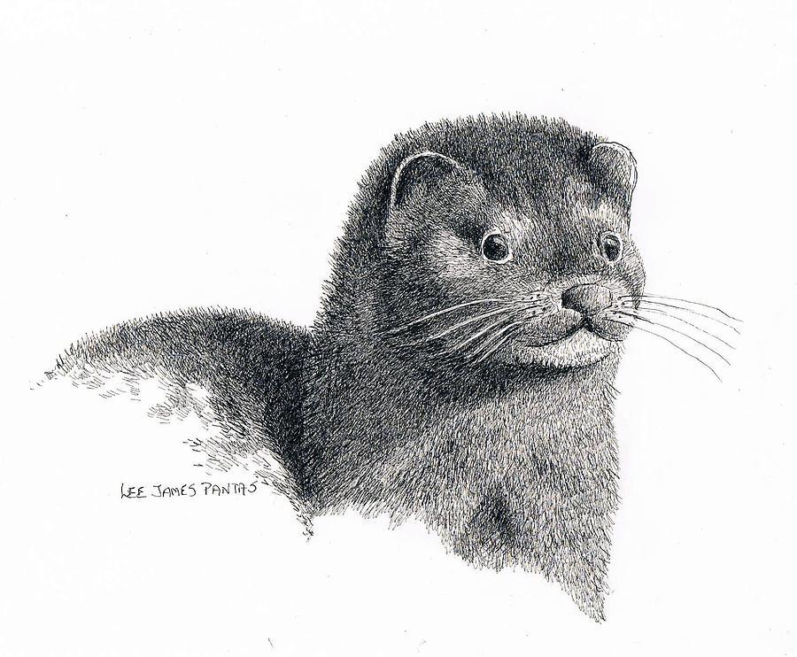 Mink Drawing - American Mink by Lee Pantas