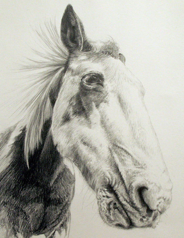 American Paint Horse Drawing - American Paint Horse by Keran Sunaski Gilmore