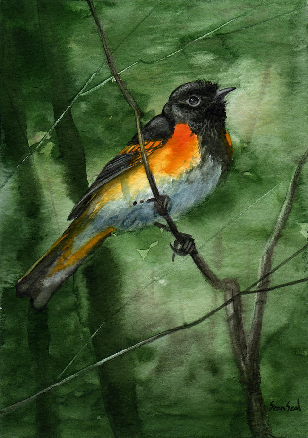 Birds Painting - American Redstart by Sean Seal