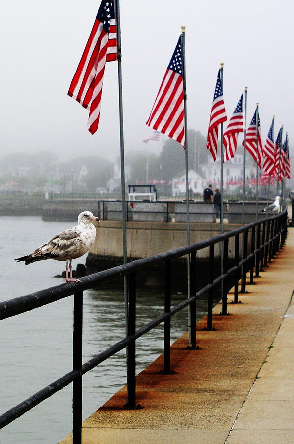 Landscape Photograph - American Seagull by Mary Capriole