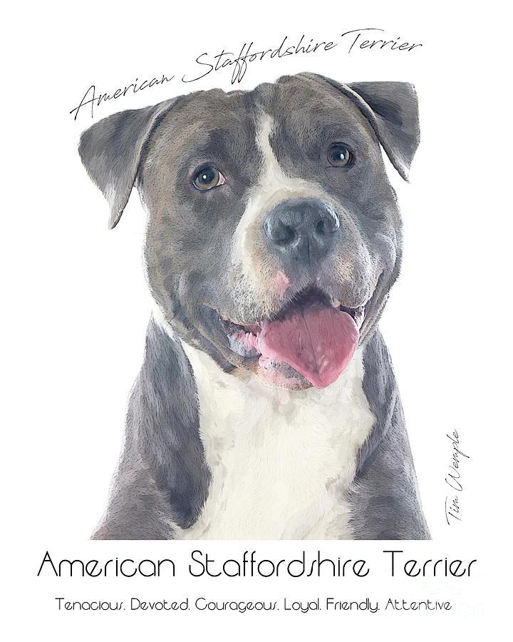 American Digital Art - American Staffordshire Terrier Poster 2 by Tim Wemple