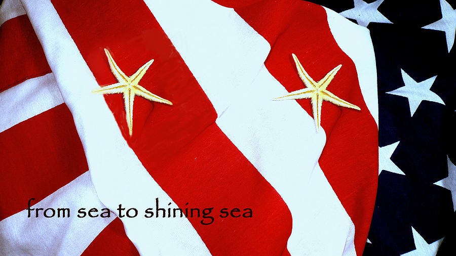 Seashell Digital Art - American Starfish 258 by Roy Azarnoff