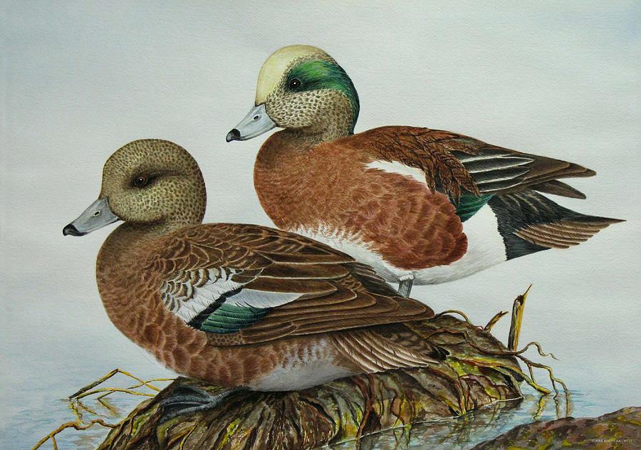 Ducks Painting - American Widgeons by Elaine Booth-Kallweit