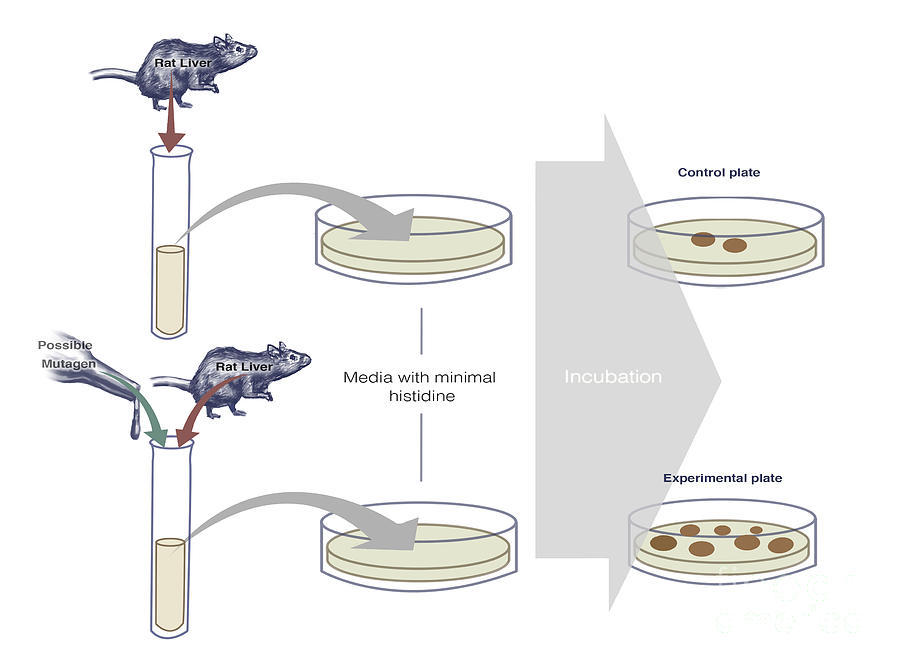 overview of ames test Here, we review the relevance of these new  activity of chemicals in the ames  test isfrequently associat-  in the ames test, bacteria are mixed with the test.