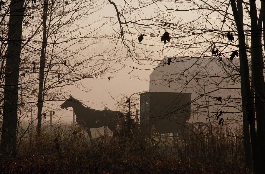 Amish Buggy Fall Photograph