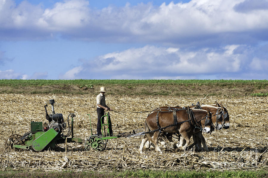 America Photograph - Amish Farmer by John Greim