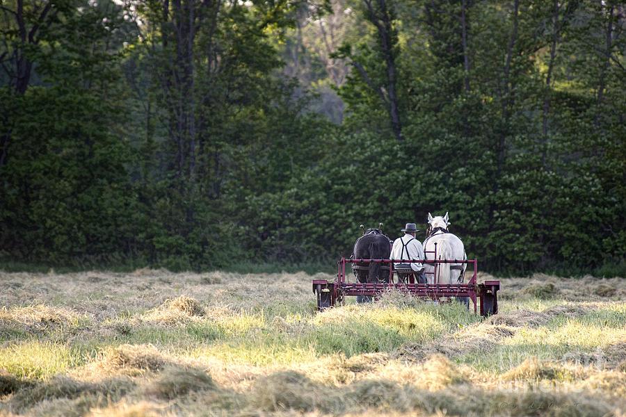 Amish Photograph - Amish Farmer Raking Hay At Dusk by David Arment