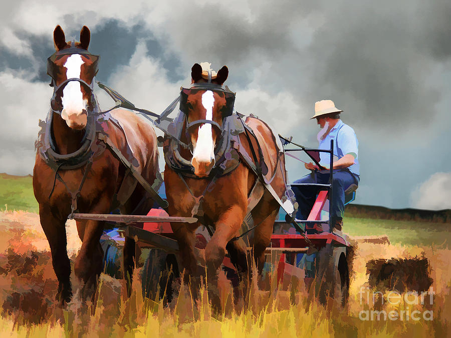 Amish Photograph - Amish Farmer by Tom Griffithe