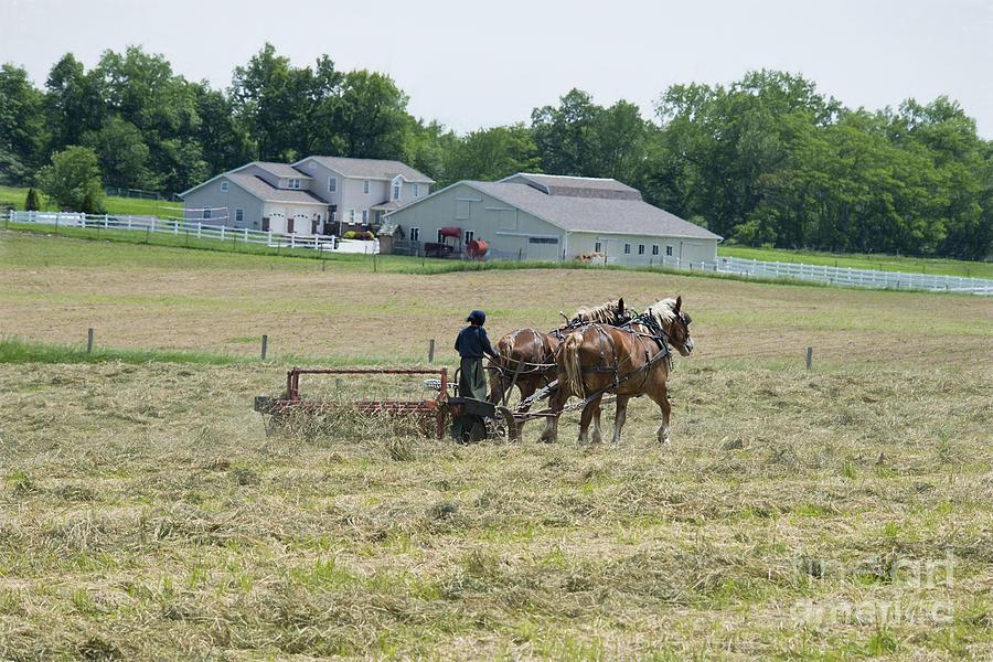 Amish Photograph - Amish Girl Raking Hay Photo by David Arment