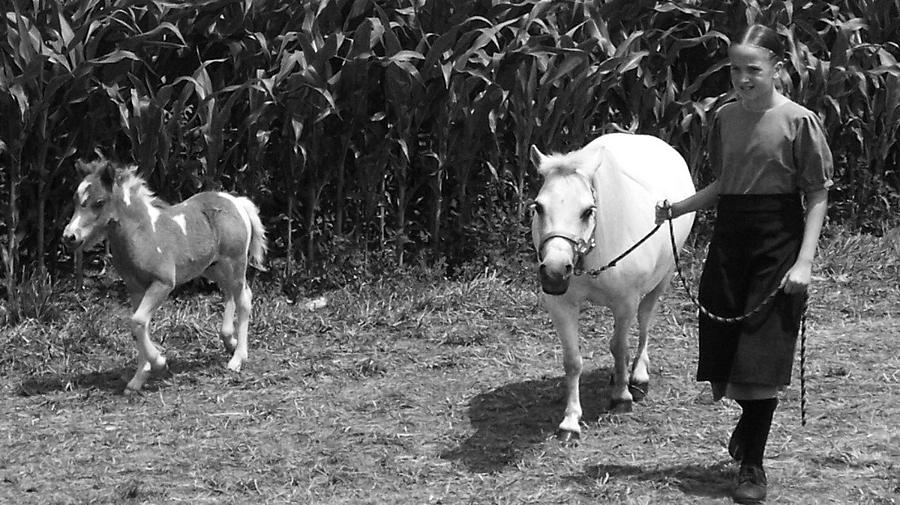Amish Girl With Her Colt Photograph by Eric  Schiabor