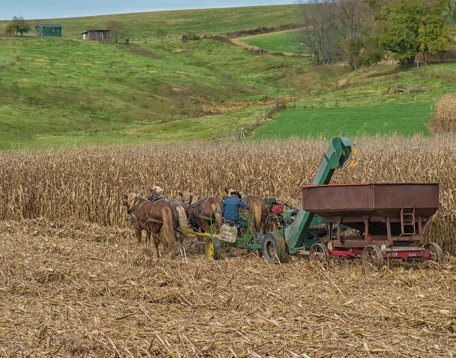 Amish Photograph - Amish Harvest In Ohio  by Richard Kopchock