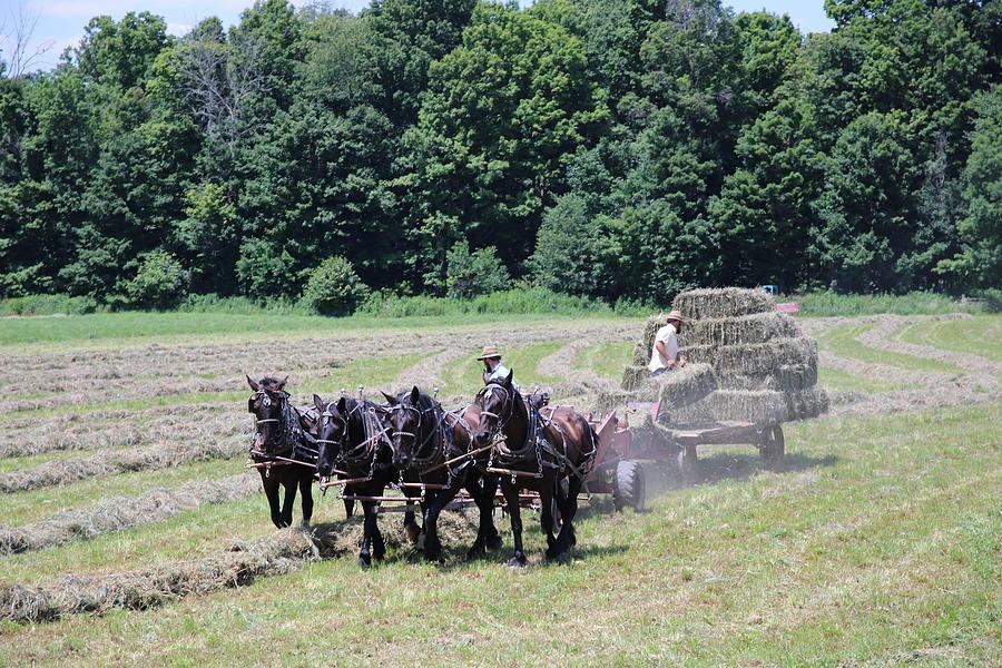 Amish Hay Harvest by Rick Redman