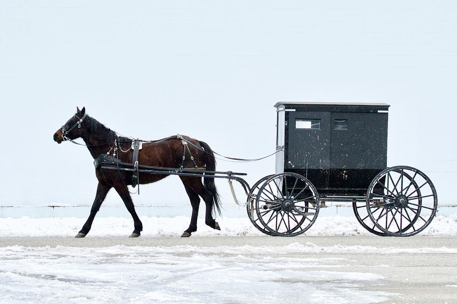 Amish Horse And Buggy 0403 Photograph