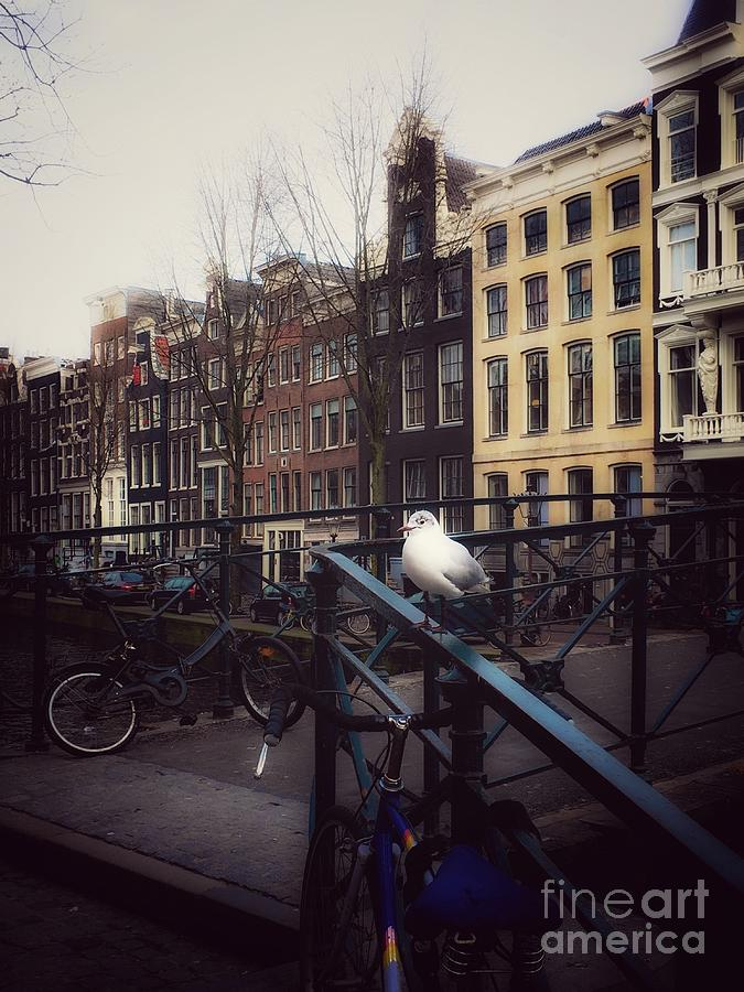Amsterdam Photograph - Amseagull by Helge
