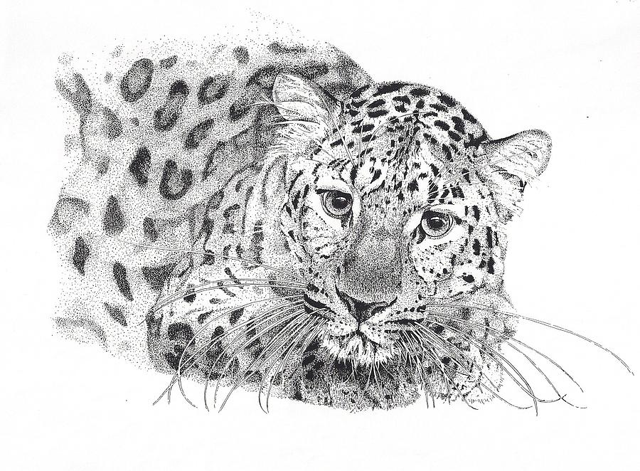 Wildlife Drawing - Amur Leopard by Riina Maido
