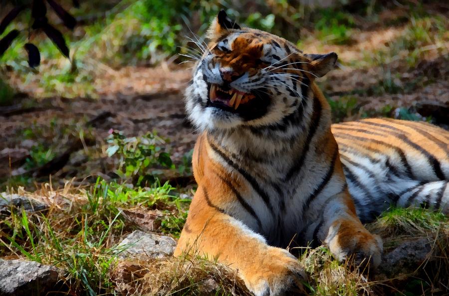 Amur Mixed Media - Amur Tiger 6 by Angelina Tamez