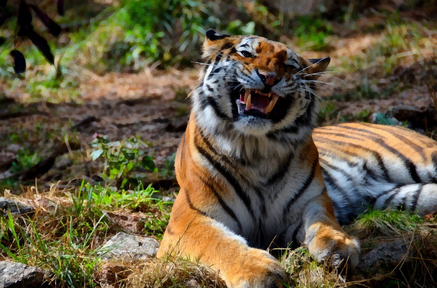 Amur Mixed Media - Amur Tiger 7 by Angelina Tamez
