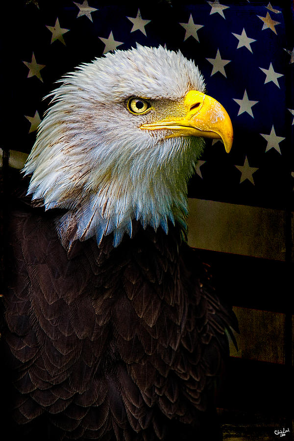 Eagle Photograph - An American Icon by Chris Lord