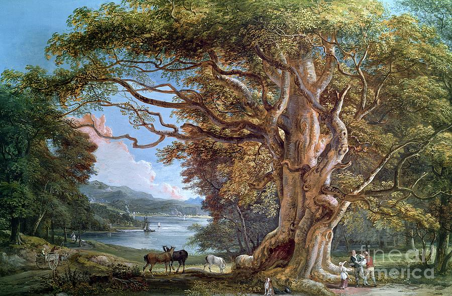 Ancient Painting - An Ancient Beech Tree by Paul Sandby