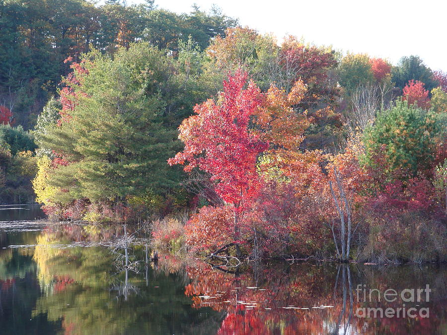 Water Photograph - An Autum Day by Robyn Leakey