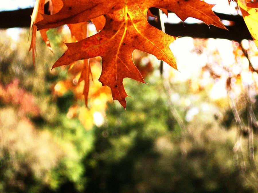 Leaf Photograph - An Autumn Leaf by Brad Scoggins
