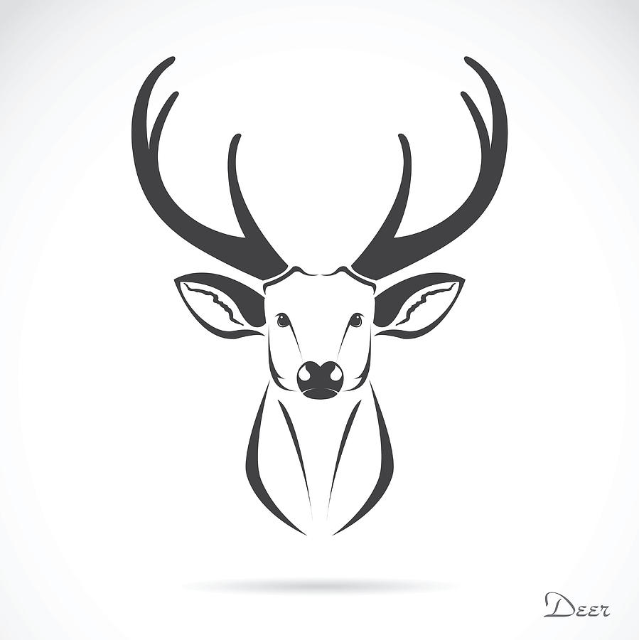 Drawingsof Deer Hesds