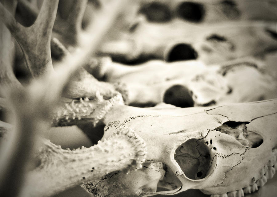 Mortality Photograph - An Echo Of Mortality by Rebecca Sherman