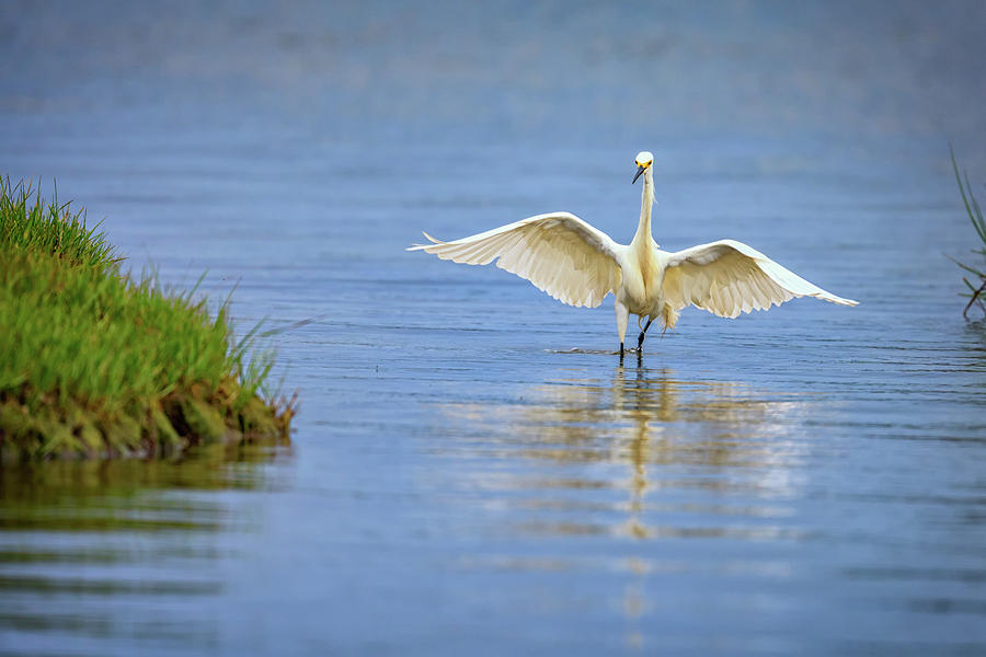 Snowy Egret Photograph - An Egret Spreads Its Wings by Rick Berk