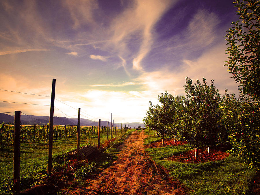 Road Photograph - An Evening By The Orchard by Tara Turner