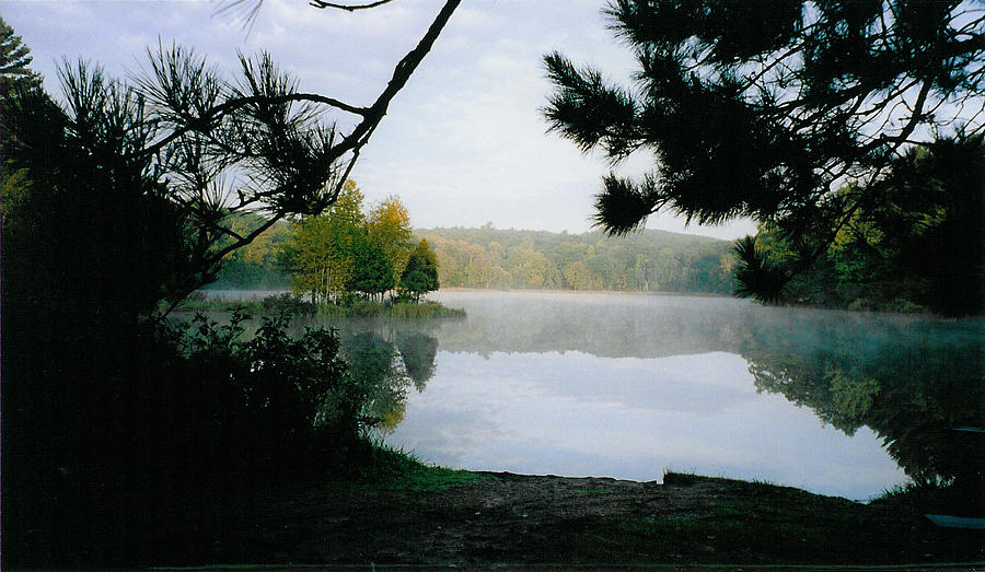 Forest Photograph - An Island Skates by Tom Hefko