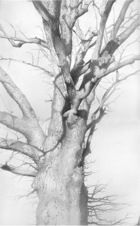 Wildlife Drawing - An Oak In The Park 2002  by Denis Chernov