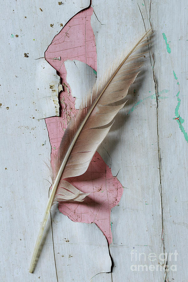 Old Photograph - An Old Door And Feather by Masako Metz