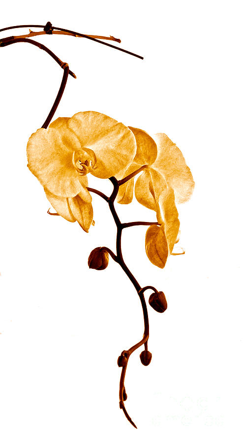 Orchid Photograph - An Orchids Perfume by Gwyn Newcombe