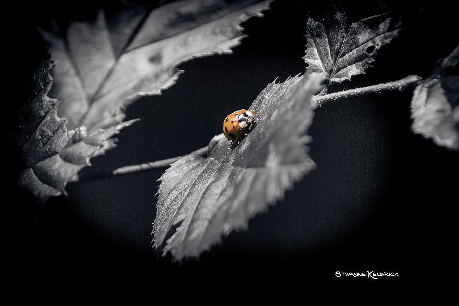 Nature Photograph - An unreachable limit by Stwayne Keubrick