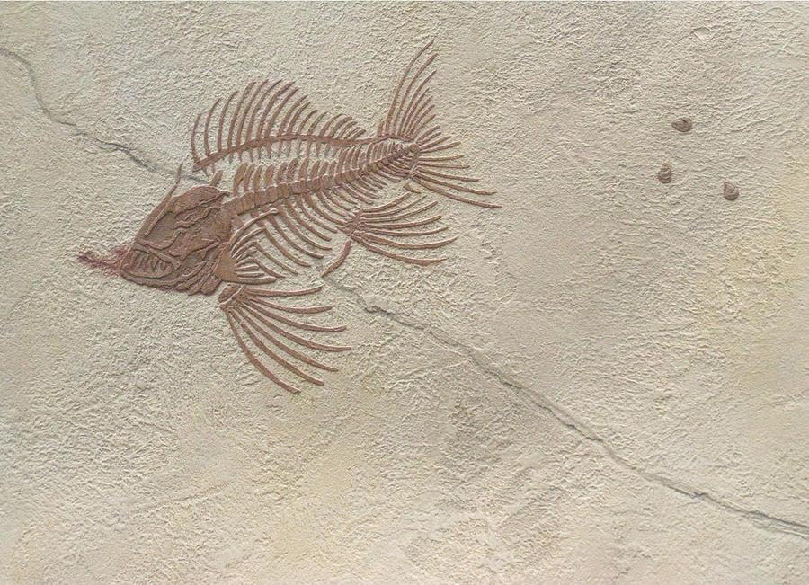 Fish Fossil Art Plaster Archaeology Paleontology Shell Limestone Ichthyology Bones Humor Plant Ancient Rocks Geology Prehistoric Plaster Skeleton Skull Death Painting - Anachronism P by Katie Fitzgerald