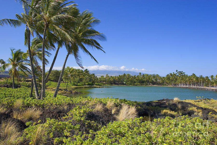 Across Photograph - Anaehoomalu Bay by Ron Dahlquist - Printscapes